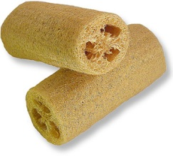 grow luffa, grow loopha, sustainability, live green, green living, whole living, frugal